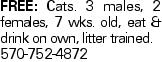 Free: Cats. 3 males, 2 females, 7 wks. old, eat &drink on own, litter trained. 570-752-4872