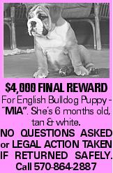 "$4,000 final REWARD For English Bulldog Puppy - ""MIA"". She's 6 months old, tan & white. NO QUESTIONS ASKED or LEGAL ACTION TAKEN IF RETURNED SAFELY. Call 570-864-2887"