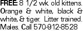 Free: 8 1/2 wk. old kittens. Orange & white, black & white, & tiger. Litter trained. Males. Call 570-912-8528