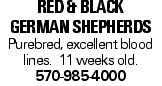 RED & BLACK GERMANSHEPHERDS Purebred, excellent blood lines. 11 weeks old. 570-985-4000