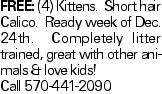 Free: (4) Kittens. Short hair Calico. Ready week of Dec. 24th. Completely litter trained, great with other animals & love kids! Call 570-441-2090