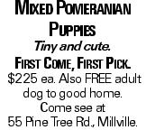 Mixed Pomeranian Puppies Tiny and cute. First Come, First Pick. $225 ea. Also FREE adult dog to good home. Come see at 55 Pine Tree Rd., Millville.