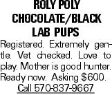 Roly Poly Chocolate/BLACK lab Pups Registered. Extremely gentle. Vet checked. Love to play. Mother is good hunter. Ready now. Asking $600. Call 570-837-9667