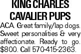 KING CHARLES CAVALIER Pups ACA. Great family/lap dogs. Sweet personalities & very affectionate. Ready to go. $800. Call 570-415-2363.
