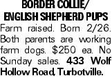 BORDER COLLIE/ ENGLISH SHEPHERD PUPS Farm raised. Born 2/26. Both parents are working farm dogs. $250 ea. No Sunday sales. 433 Wolf Hollow Road, Turbotville.
