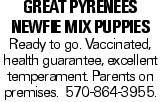 Great Pyrenees Newfie Mix Puppies Ready to go. Vaccinated, health guarantee, excellent temperament. Parents on premises. 570-864-3955.