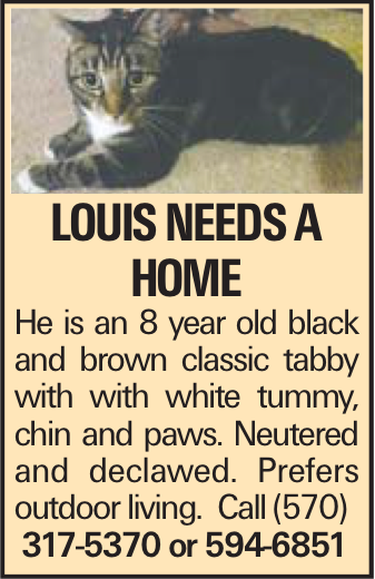 LOUIS needs a home He is an 8 year old black and brown classic tabby with with white tummy, chin and paws. Neutered and declawed. Prefers outdoor living. Call (570) 317-5370 or 594-6851