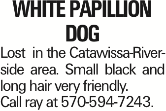 white papillion dog Lost in the Catawissa-Riverside area. Small black and long hair very friendly. Call ray at 570-594-7243.