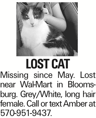 Lost cat Missing since May. Lost near Wal-Mart in Bloomsburg. Grey/White, long hair female. Call or text Amber at 570-951-9437.