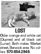 Lost Older orange and white cat (Dupree) and all black cat (Lunar). Both males. Market street, Berwick area. No collars. 570-854-2949.