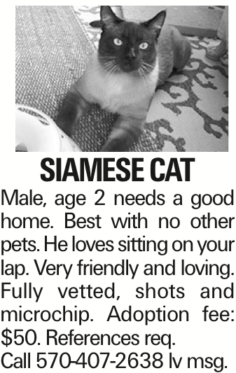Siamese cat Male, age 2 needs a good home. Best with no other pets. He loves sitting on your lap. Very friendly and loving. Fully vetted, shots and microchip. Adoption fee: $50. References req. Call 570-407-2638 lv msg.