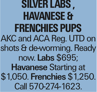 SILVER LABS , HAVANESE & Frenchies PUPS AKC and ACA Reg. UTD on shots & de-worming. Ready now. Labs $695; Havanese Starting at $1,050. Frenchies $1,250. Call 570-274-1623.