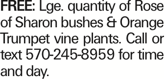FREE: Lge. quantity of Rose of Sharon bushes & Orange Trumpet vine plants. Call or text 570-245-8959 for time and day. As published in the Press Enterprise.