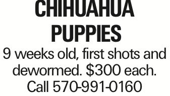 CHIHuaHua PUPPIES 9 weeks old, first shots and dewormed. $300 each. Call 570-991-0160 As published in the Press Enterprise.