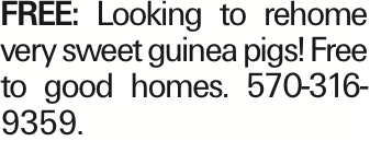 FREE: Looking to rehome very sweet guinea pigs! Free to good homes. 570-316-9359. As published in the Press Enterprise.