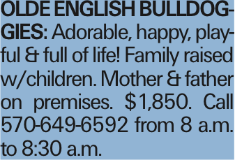 OLDE ENGLISH BULLDOGGIES: Adorable, happy, playful & full of life! Family raised w/children. Mother & father on premises. $1,850. Call 570-649-6592 from 8 a.m. to 8:30 a.m. As published in the Press Enterprise.