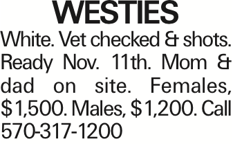 WESTIES White. Vet checked & shots. Ready Nov. 11th. Mom & dad on site. Females, $1,500. Males, $1,200. Call 570-317-1200 As published in the Press Enterprise.