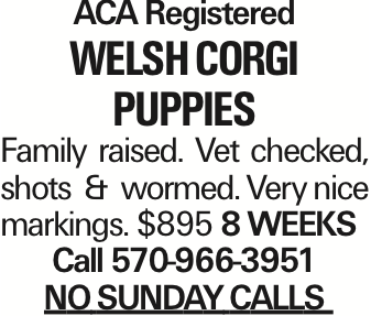 ACA Registered welsh corgi Puppies Family raised. Vet checked, shots & wormed. Very nice markings. $895 8 weeks Call 570-966-3951 NOSUNDAYCALLS As published in the Press Enterprise.