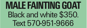 Male fainting goat Black and white $350. Text 570-951-9666 As published in the Press Enterprise.