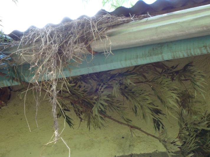 blocked-gutters-that-need-cleaning
