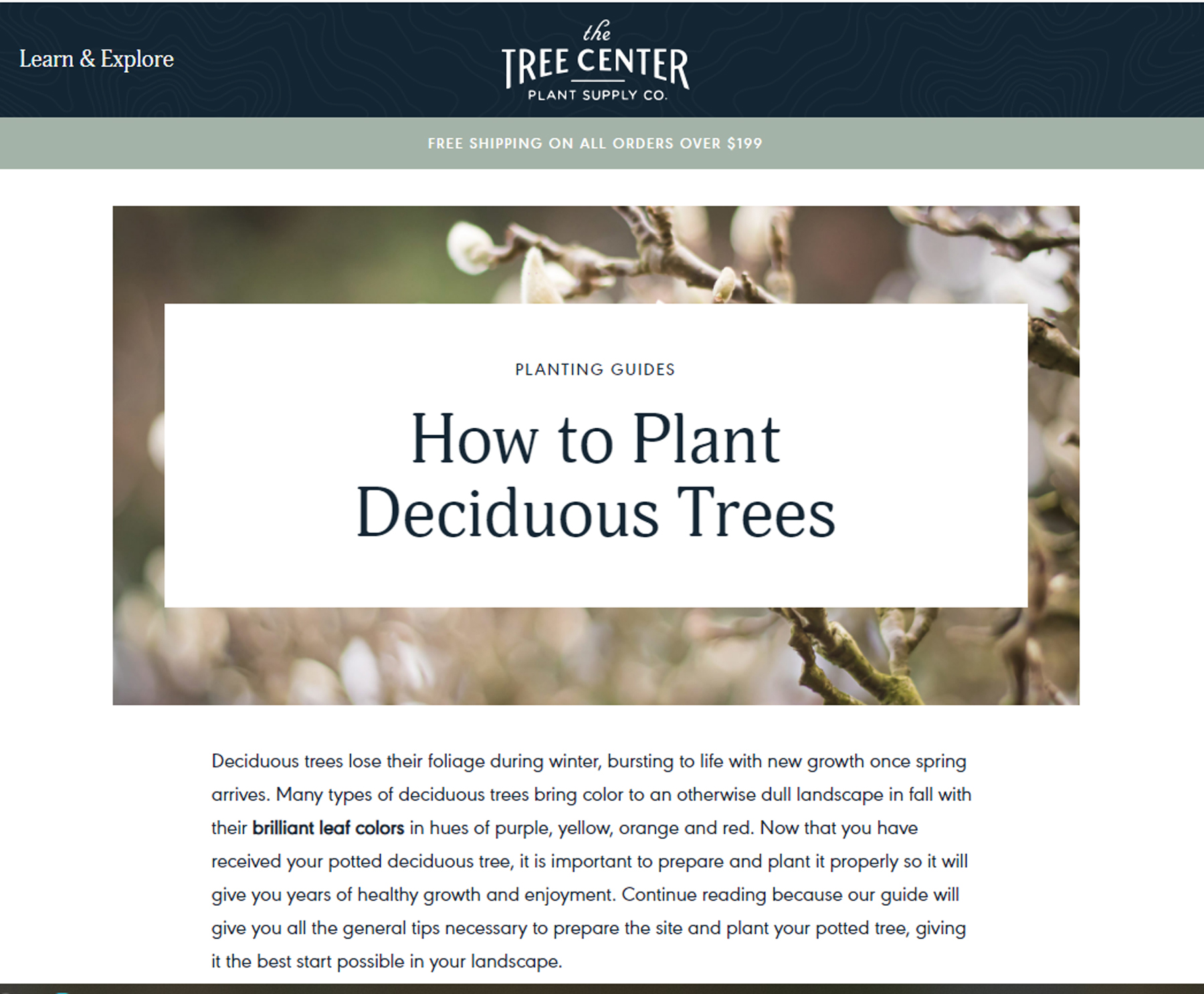 Extra long-form evergreen content example: How to plant deciduous trees