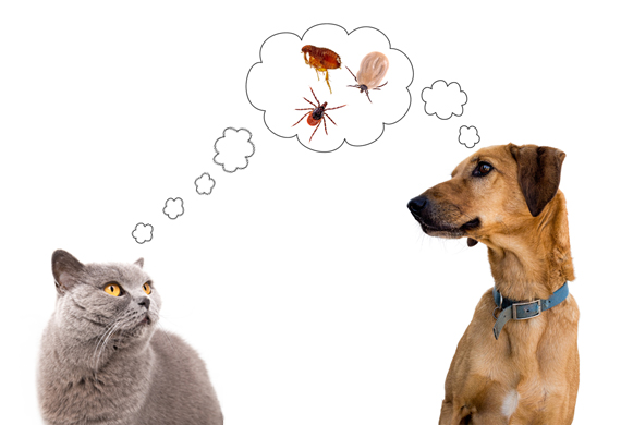 a dog and a cat thinking about pests