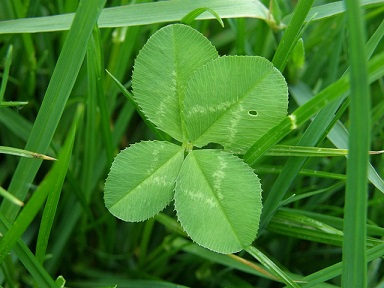 4-leaf clover good luck