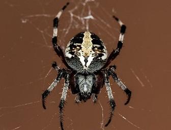 spider in dreams