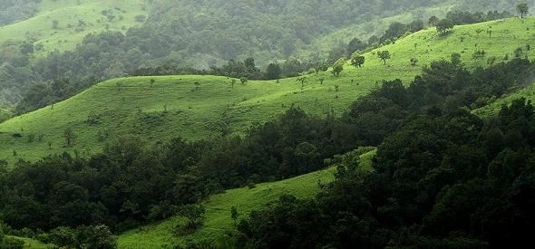 Shola Grasslands