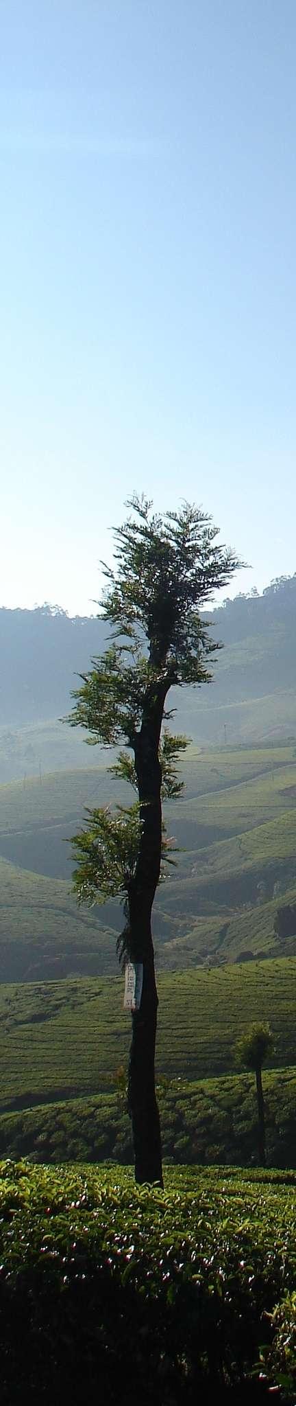 sitemap indiaaura