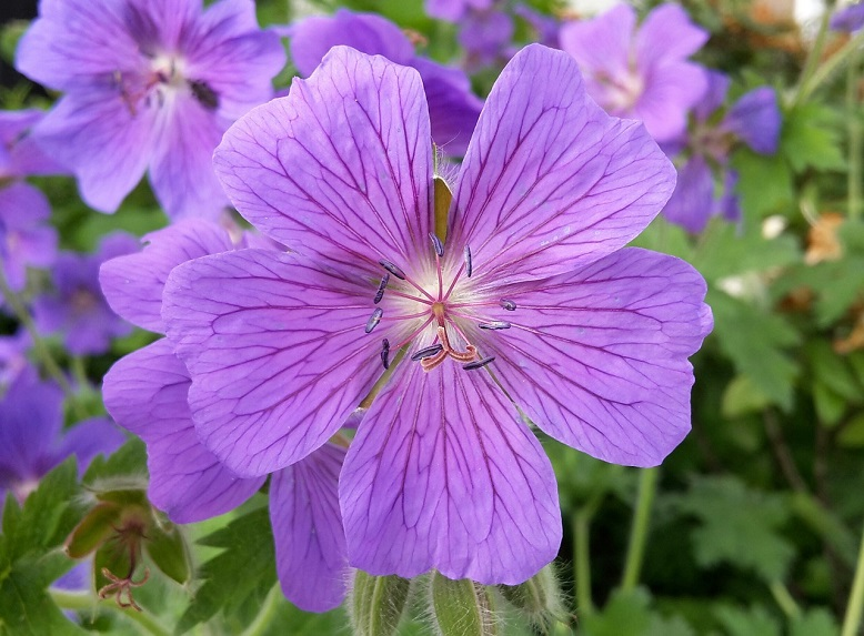 violet petals