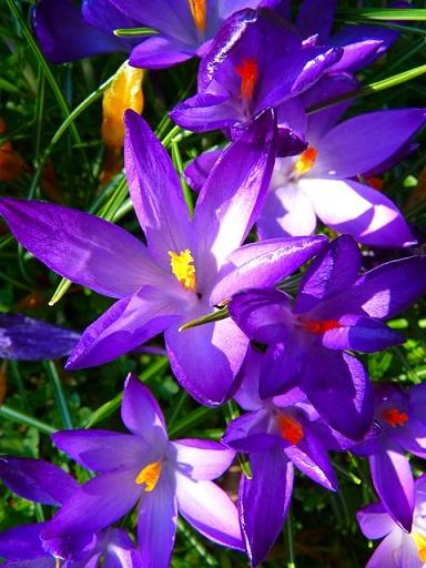 violet flower petals