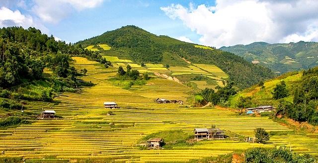 color green landscape