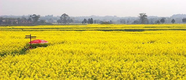 yellow scenery