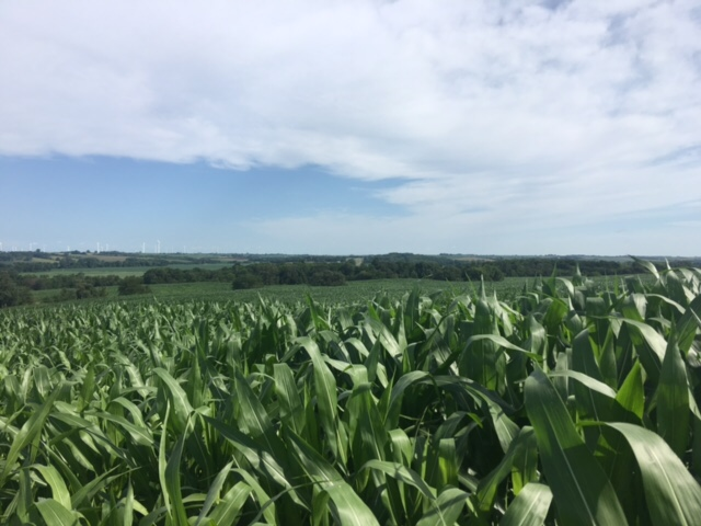 807 Acres In Adams County, Iowa with Diversified Incomes!  With 504 Acres Tillable (Cash Rent-2016- $120,000.00) Hunting Lease,($11,000.00/year) and a  Windmill Lease ($7500.00 that increases 2% each year) this property shows good incomes each year.  Located North of Corning, Iowa.