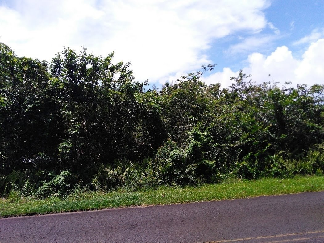 This is a beautiful lot along a paved road which is over 20000 sq. ft giving you ample of room for a beautiful home and a garden. What can get any better then this? Check it out now!  Puna Beach Palisades is a lovely ocean side community with sunny weather and walking distance to Kehena Black Sand Beach.  Hwy 137 also known as red road between mile marker 18 and 19 turn into Olina Drive, RT on Punakai Street, life on Kipuka Street, 3th lot on left.