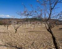 Land in Murcia (4)