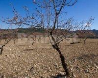 Land in Murcia (5)