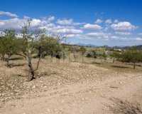 Land in Murcia (6)