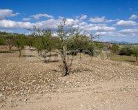 Land in Murcia (7)