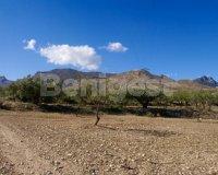 Land in Murcia (8)