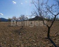 Land in Murcia (10)