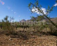 Land in Murcia (14)
