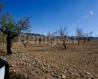 Land in Murcia (15)