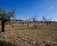 Land in Murcia (16)