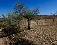Land in Murcia (17)