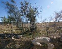 Land in Murcia (21)