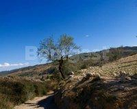 Land in Murcia (24)
