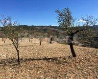 Land in Murcia (25)