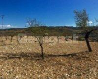 Land in Murcia (28)